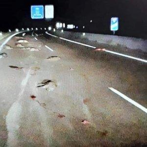 Terrorífico accidente: atropella y mata a 12 jabalíes y continúa con su marcha