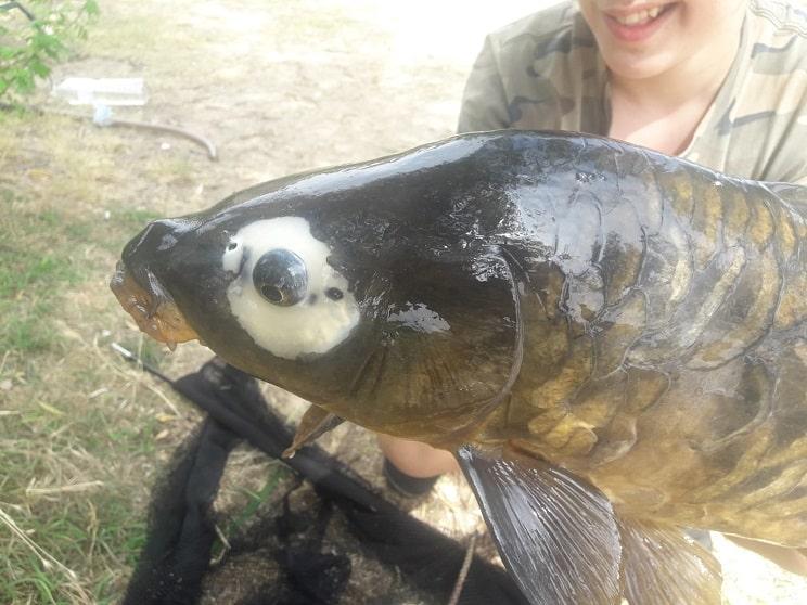 Un joven salmantino pesca en el Tormes una carpa 'ojo de perdiz'