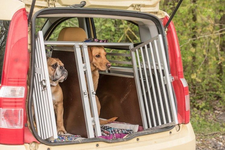 Cómo eliminar pelos de perro del coche