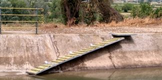 canal corzos