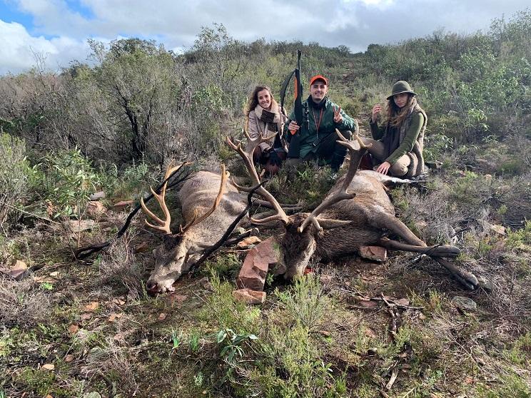Caza un magnífico ciervo de 17 puntas en una montería que le costó 50 euros