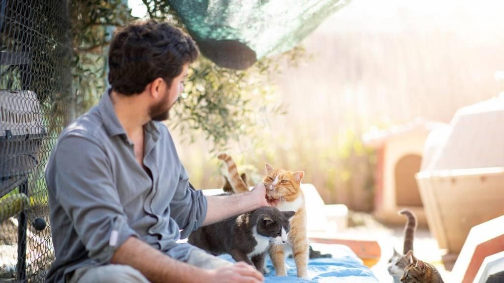 cazadores perros gatos