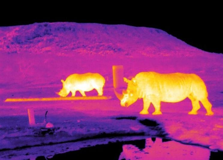Imagen infrarroja de rinocerontes en Sudáfrica captada mediante astroecología / Fotografía: Endangered Wildlife Trust