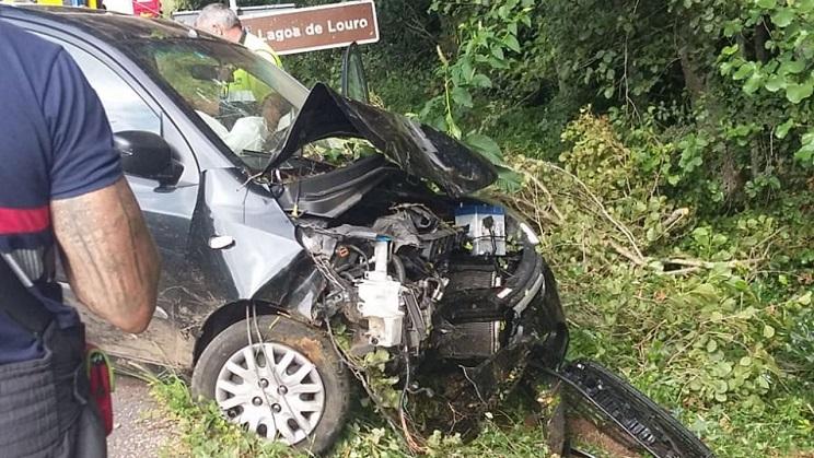 Una mujer estrella su coche contra un árbol y lo derriba por esquivar a un jabalí
