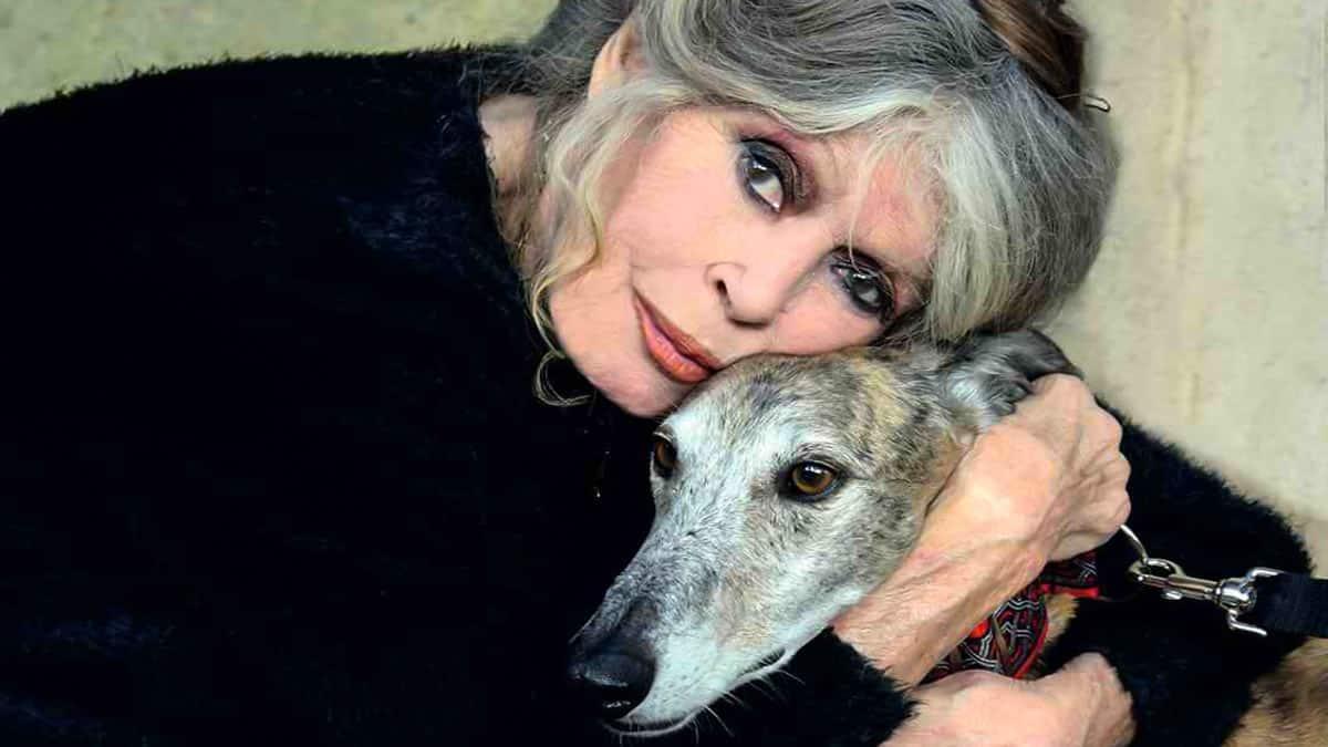 Brigitte Bardot pidió en 2016 la prohibición de la caza con galgos en España.