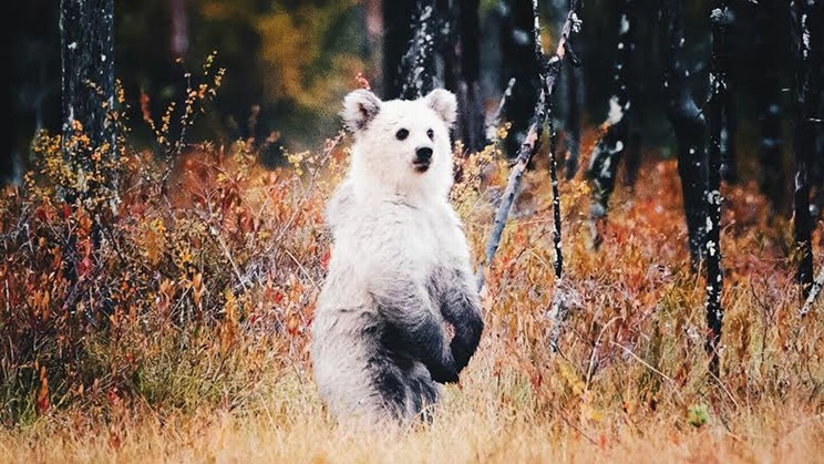 Esta es la instantánea del extraño oso que no para de compartirse