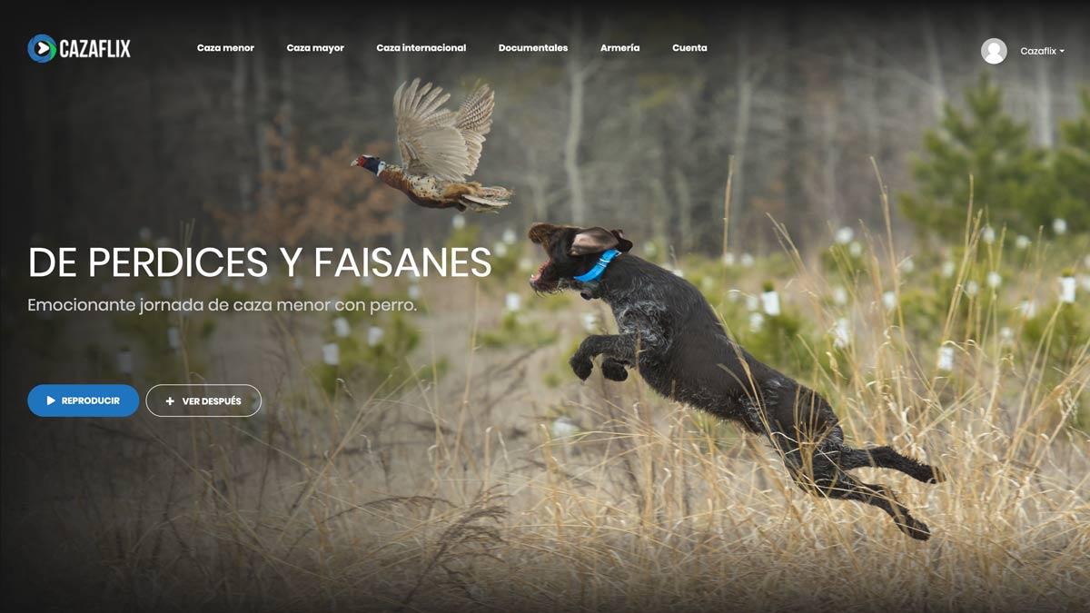 caza perdices faisanes
