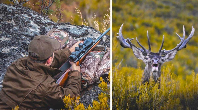 Berrea en Zamora: la historia de un ciervo único que se perdió para siempre