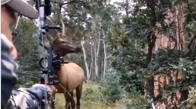 Un ciervo se para a 30 centímetros de un cazador: en este vídeo puedes ver lo que pasó
