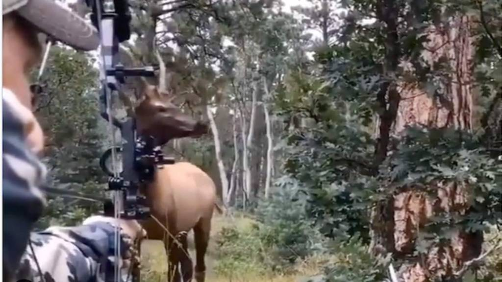 vídeo ciervo cazador