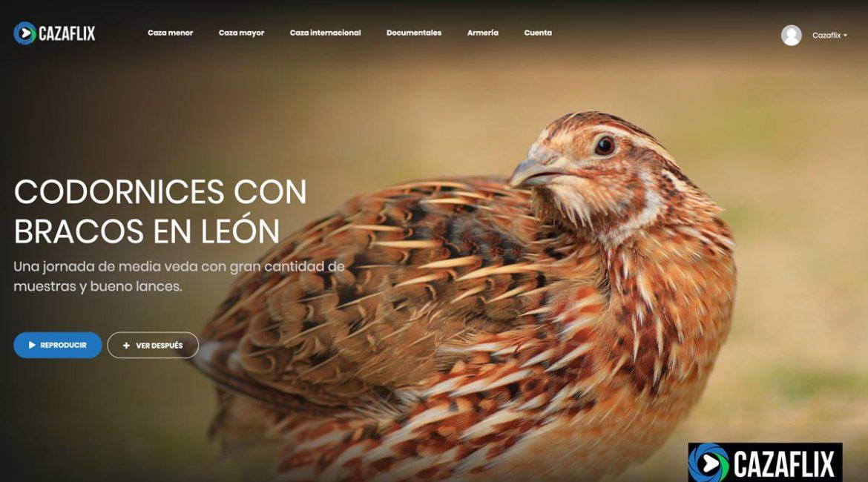 Hoy, gratis en Cazaflix, Codornices con bracos en León