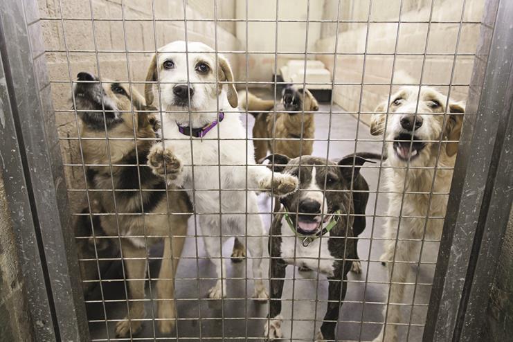 Perros de protectora o perrera