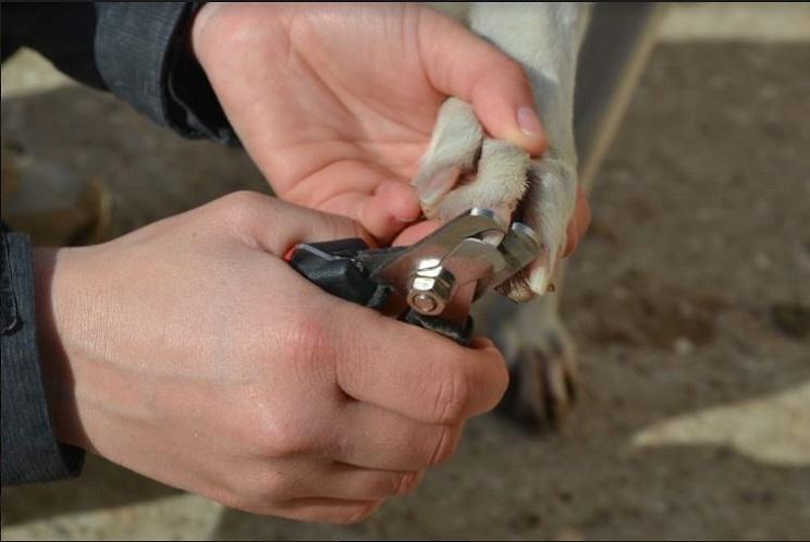 Cortando las uñas de un galgo / Fotografías: Melisa Vara
