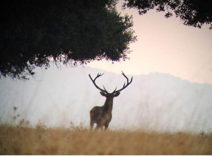 Parque Nacional de Cabañeros / Foto:  Eldigitalcastillalamancha.es