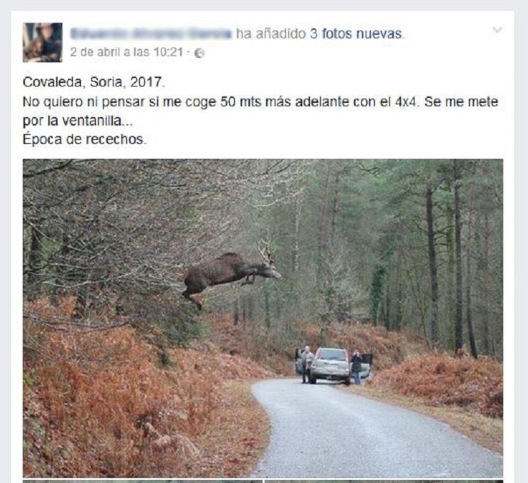 Captura Facebook foto de un ciervo volando-edit