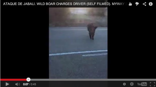 ¡Un jabalí ataca a un coche!