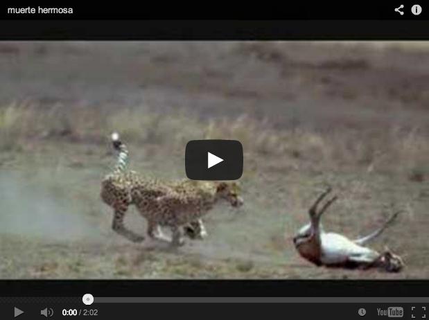 La vida, la muerte y la caza. Hermoso vídeo sobre el ciclo de la vida