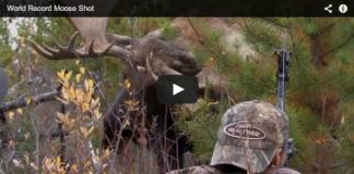 Video de caza con arco a un arce