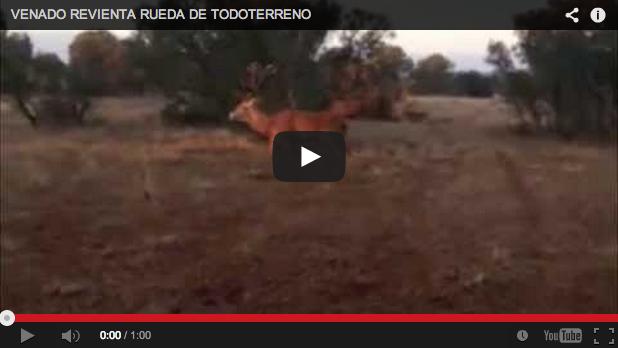 Berrea 2013: Un venado revienta la rueda de un todoterreno