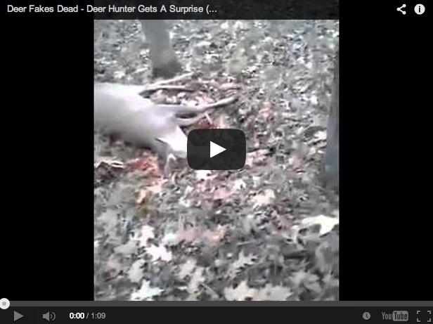 Un ciervo se hace el muerto: ¡tremendo susto para el cazador!