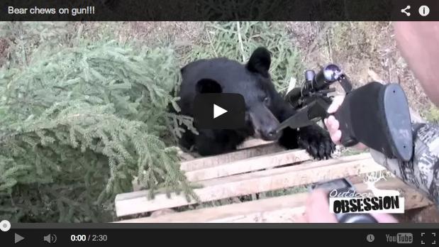 Un oso negro intenta subirse al puesto de un cazador ¡con éste dentro!