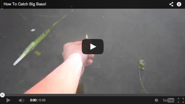 Así se pesca un black bass con la mano
