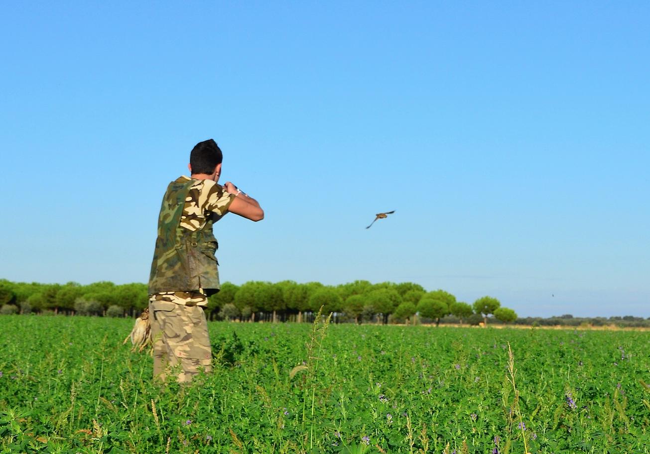 La sequía favorece la presencia de aves en media veda