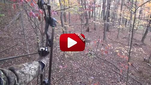 Un chico de 12 años abate dos ciervos con una sola flecha