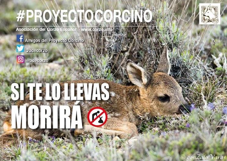 La Asociación del Corzo Español presenta su campaña proyecto corcino 2019