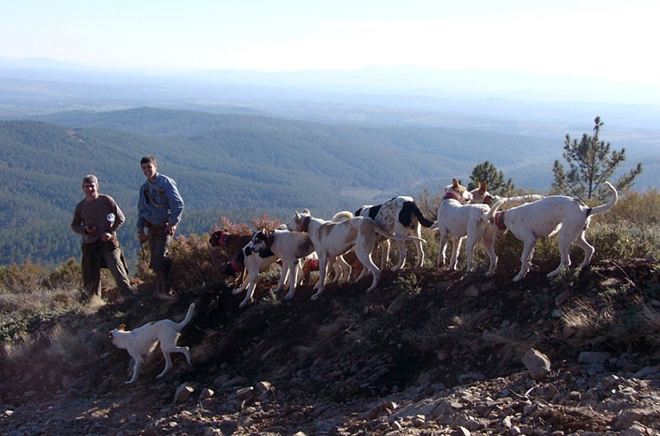 Extremadura cierra una nueva temporada marcada por la crisis de la caza menor y un comportamiento positivo de la caza mayor