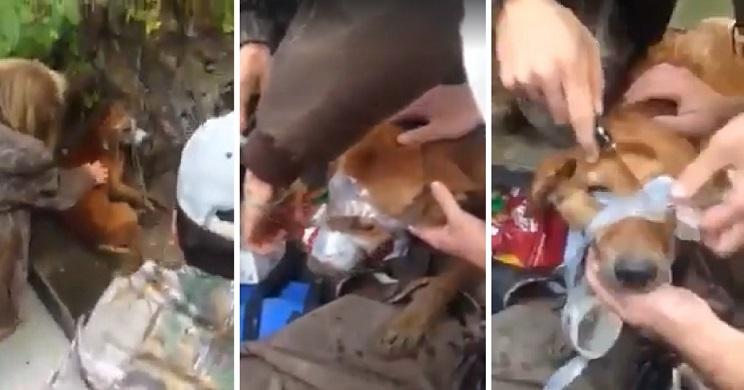Cazadores salvan la vida a un perro amordazado