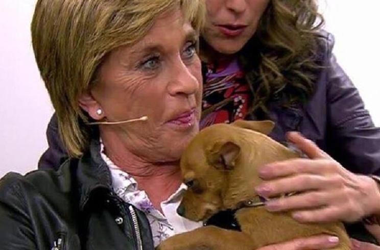 Chelo García Cortés denuncia en Sálvame las prácticas de una protectora de animales