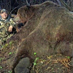 Cazan en Alaska el nuevo récord mundial de oso pardo con arco