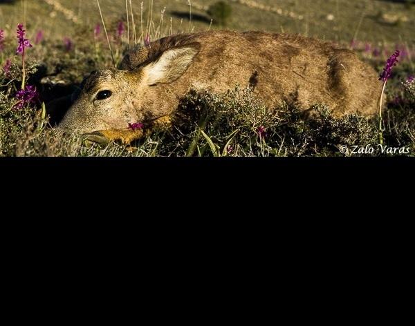 La ACE organiza un concurso fotográfico sobre la dignificación del animal una vez abatido