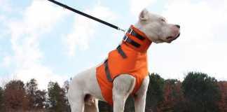 Chaleco proteccion perro jabalies