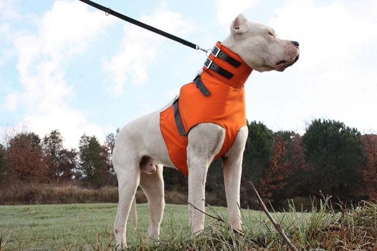 Protecciones para perros grandes / Club RIM