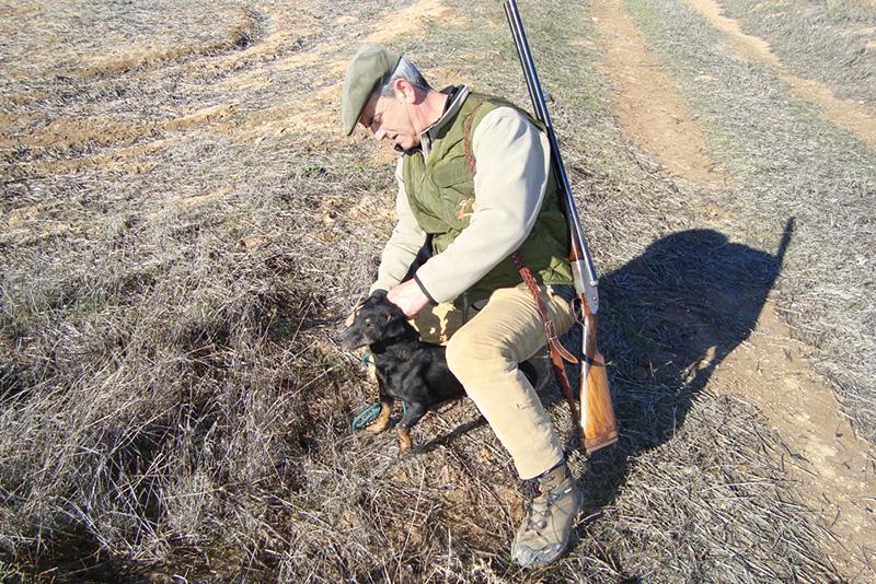 Cazando con perros de madriguera