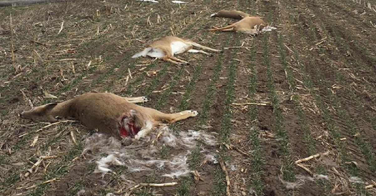 Una docena de ciervos mueren electrocutados por la caída de una línea de alta tensión