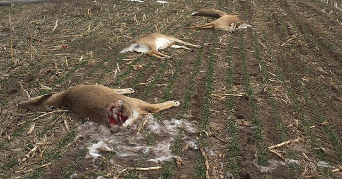 Downed-Power-Lines-Kill-Deer-Kansas_redim