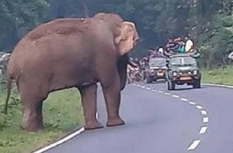 Elefante instantes antes del ataque / Fotografía: elpais.com
