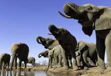 Elefantes / Fotografía: jaraysedal.es
