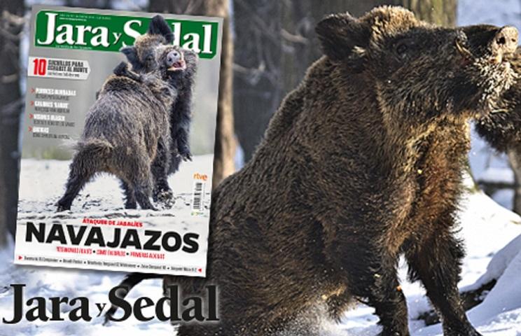 Ataques de jabalíes, uno de los temas centrales del primer número del año de Jara y Sedal