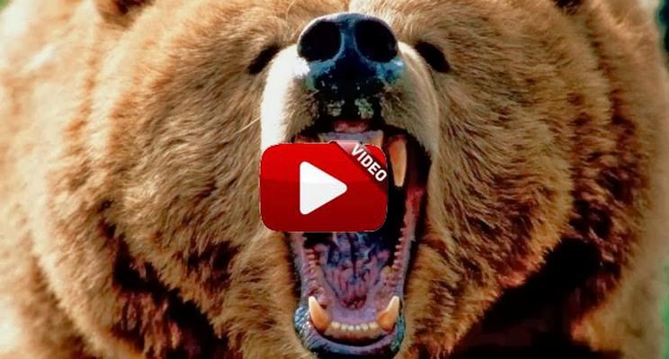 Así se las arregla un oso para cazar un ciervo