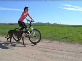 Entrenando un galgo con bicicleta / Fotografía: Melisa Vara