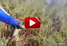 Este pescador intenta devolver al agua su captura y...