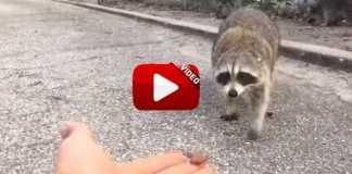 Esto es lo que te puede pasar si alimentas a una animal salvaje.