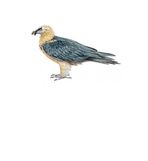 El 13% de las aves, en situación crítica