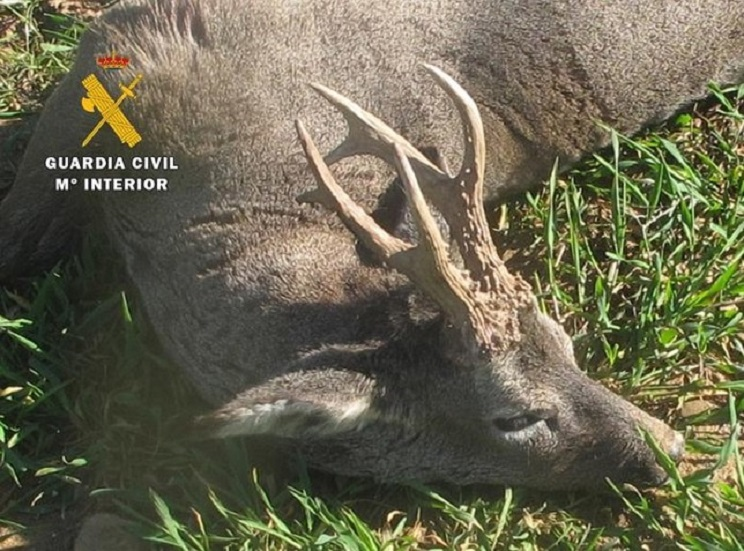 Un furtivo mata un corzo y le condenan a pagar más de 7.000 euros al coto
