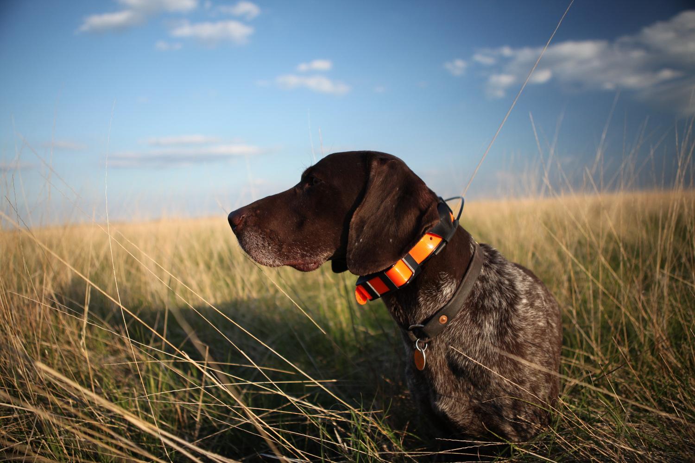 Garmin lanza Alpha®, un dispositivo que  integra el seguimiento y el entrenamiento  de perros de caza