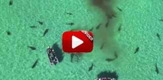 Graban con un dron tiburones.